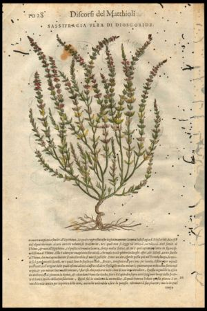 botanica-xilografia1