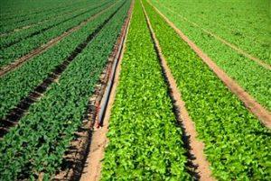 a study of organic farming