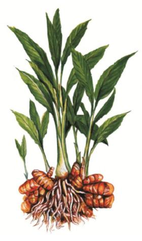 2-curcumin turmeric