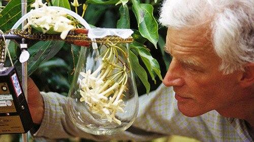 Living-Flower Technology