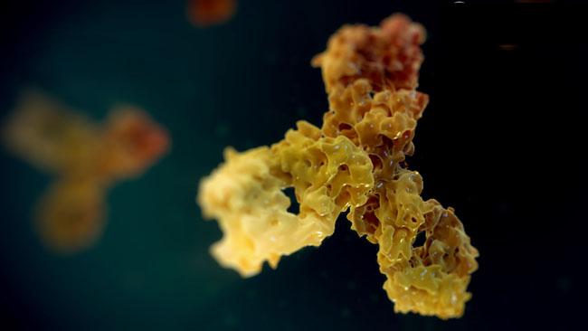 Monoclonal-Antibody