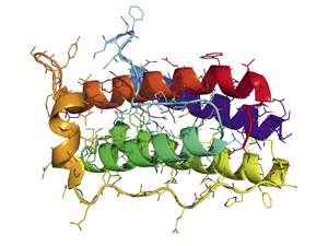 Protein_secondary_structure