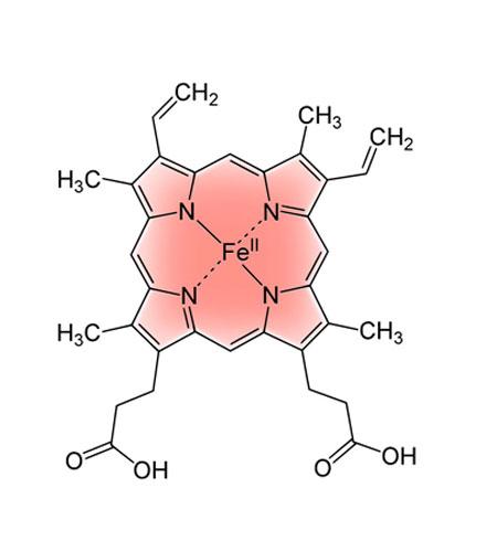 Гемоглобин - комплекс порфирина с двухвалентным железом