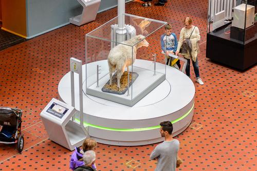 Чучело вівці Доллі в музеї Едінбурга
