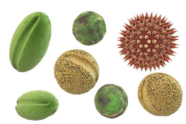 Пилок рослин (3D графіка)