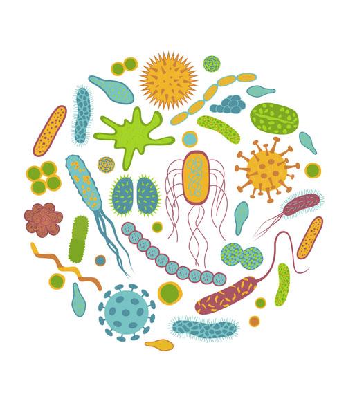 Кишкова мікробіота