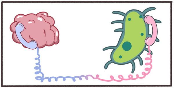 Кишкові бактерії та мозок