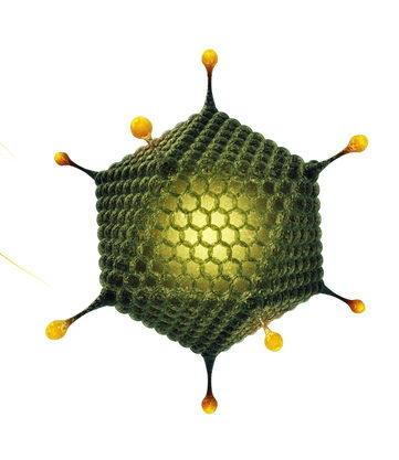 Модель частинки аденовірусу